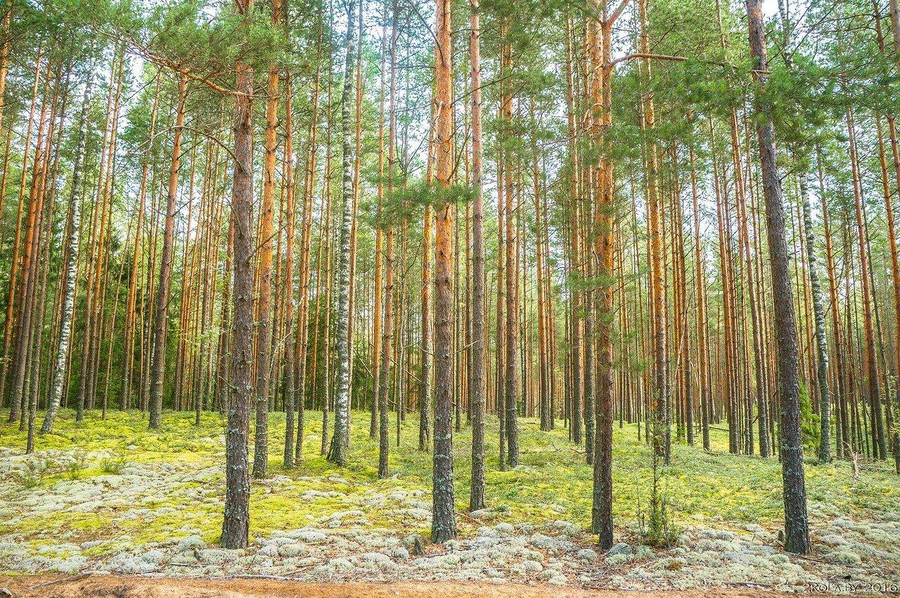 Лес. Северная Беларусь