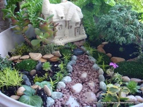 композиции из комнатных растений 10