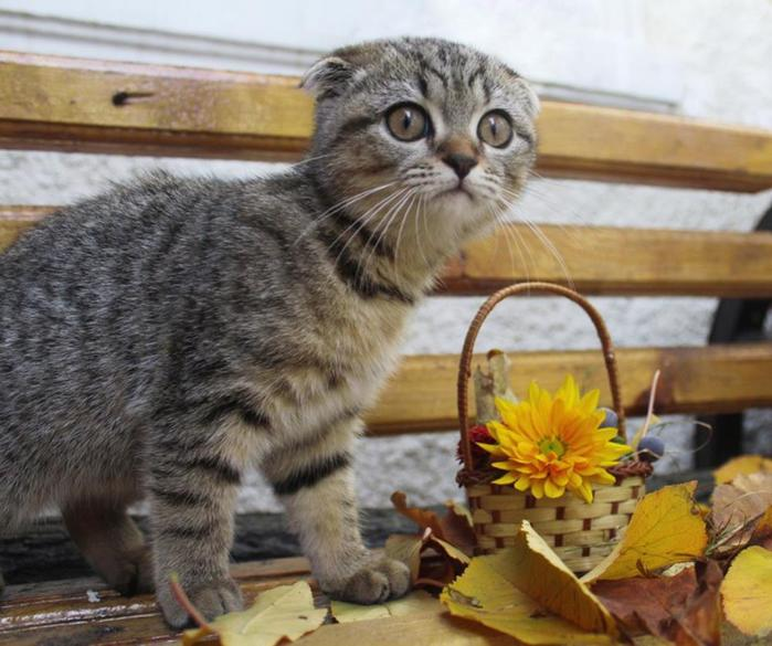Кошки и притягательные ароматы цветов: красивые фотографии