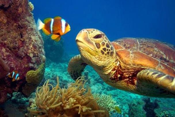 Гибель редких зеленых черепах