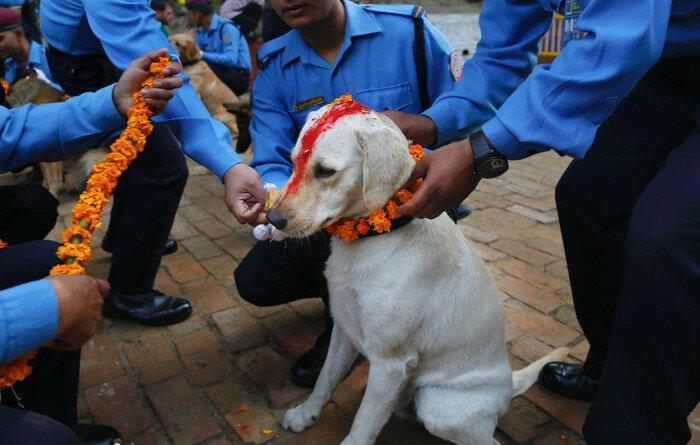 Тренировочная школа полицейских собак. Фестиваль Тихар в Катманду.