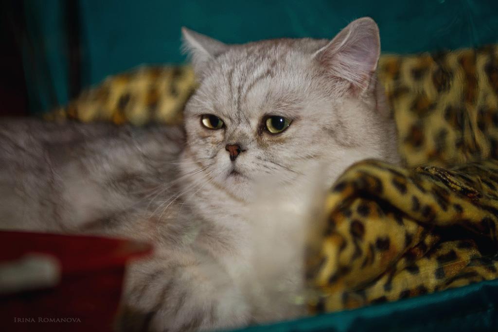кошки 18 л.jpg