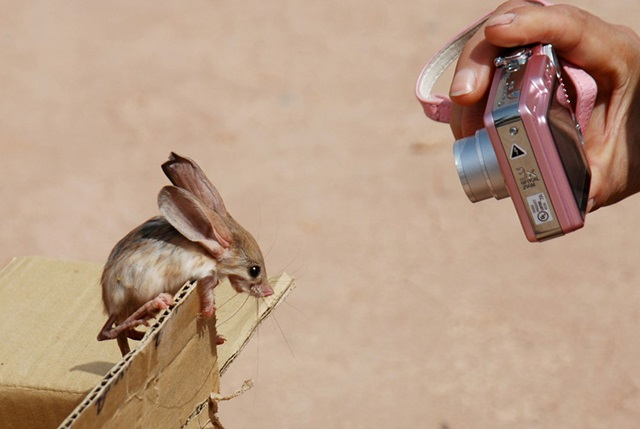 Забавные фото! Самые редкие и милые животные планеты