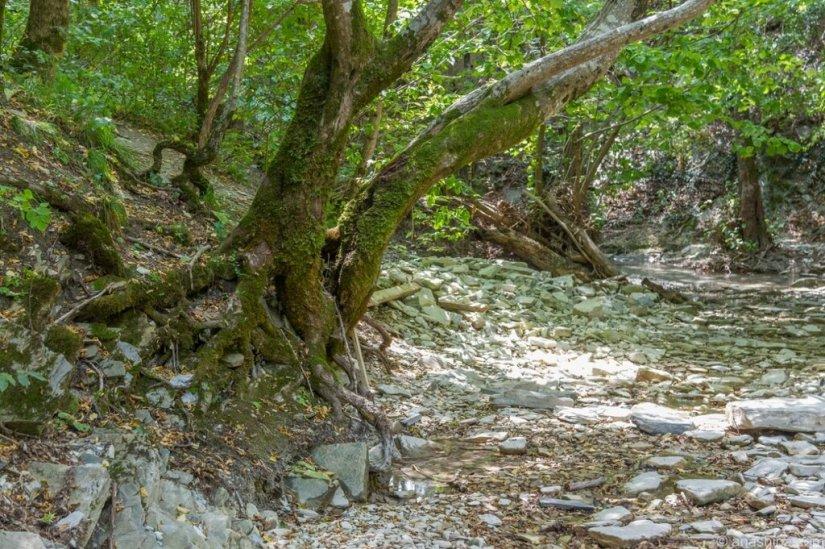 Деревья на берегу, река Ачибс