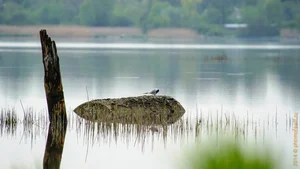 Фотографии на Яндекс.Фотках