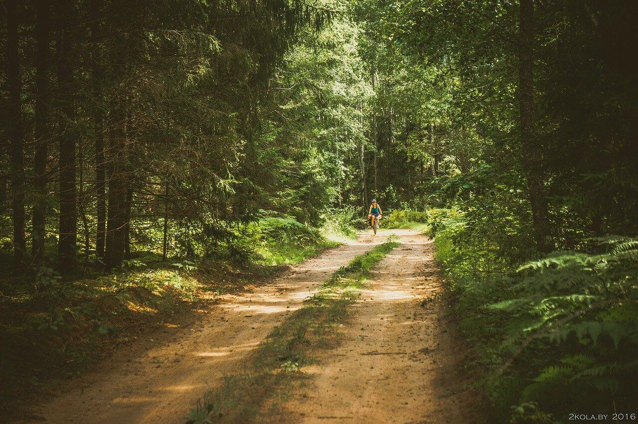 Лесные дороги