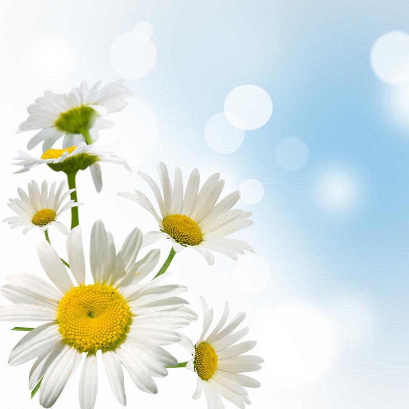Красиви пролетни картинки