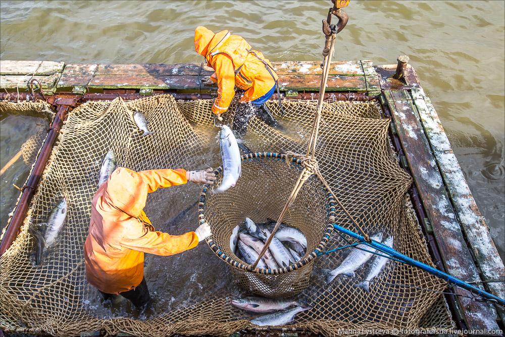 Anadyr, fish catch