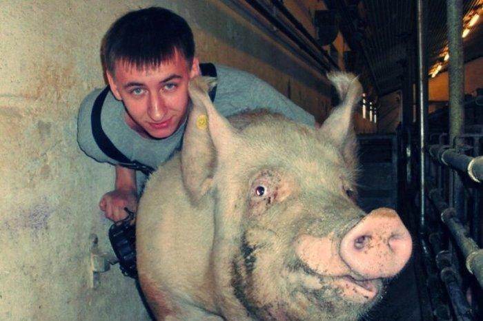 Свадебная ваза и сумасшедший фермер, насилующий свиней