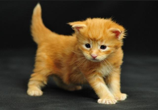 Сколько лет вашей кошке?
