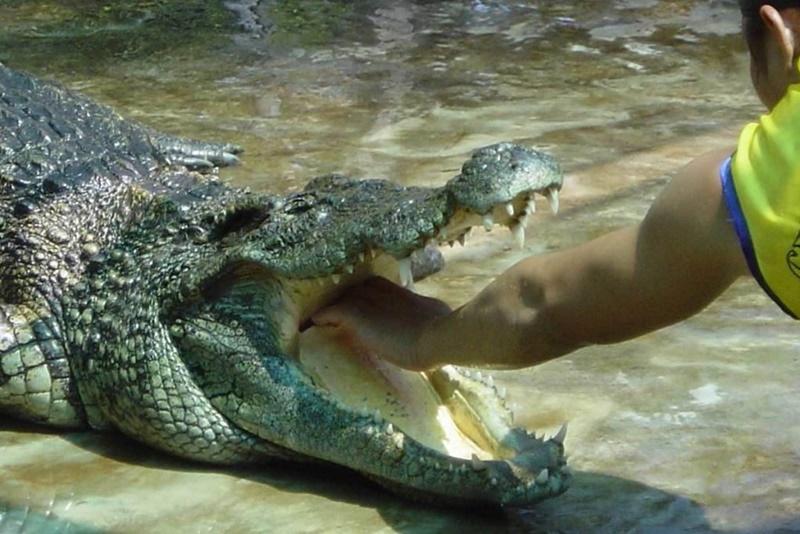 Олимпийские объекты Бразилии заселили крокодилы