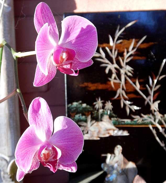 О = Орхидея