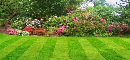 красивый рулонный газон