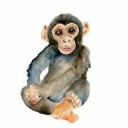 maymun bepul oynaydi
