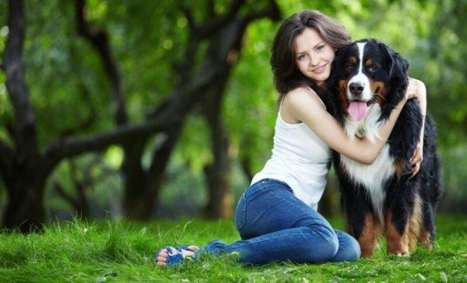 Как человек приручил собаку