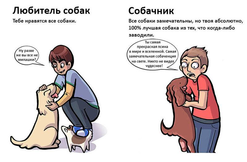 Любитель собак против истинного собачника: отличия в картинках
