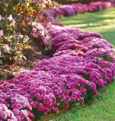 самые красивые цветники