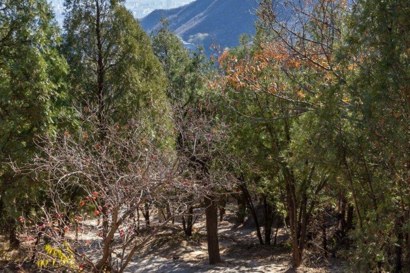 Осенний лес, Бадачу