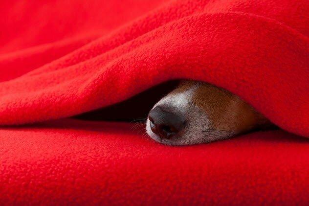Собаку нужно разбудить, если ей, как кажется, снится кошмар