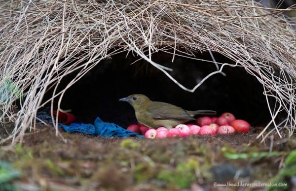 Фотографии 13необычных домов, которые построили себе животные