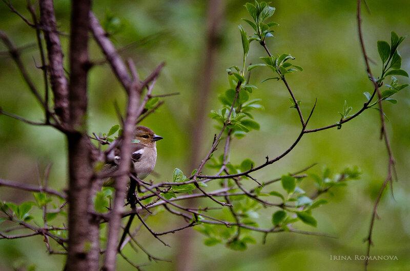 птицы ботансада 7 л.jpg