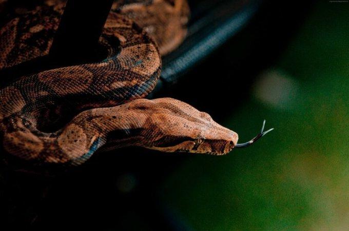 Интересные факты о змеях: опаснее всего в Австралии