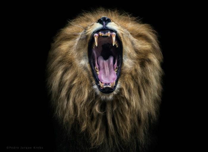 Фотографы, снимающие красивые портреты диких животных
