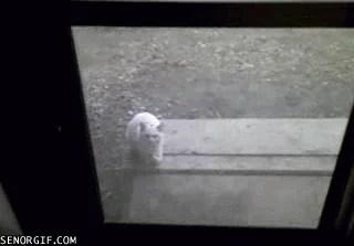 Блин, да чтож я все время к стеклу то прилипаю?!