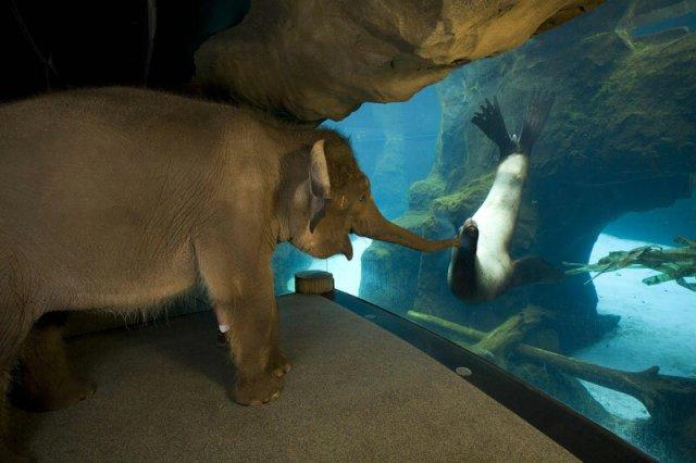 Фото дня: слон и морской лев