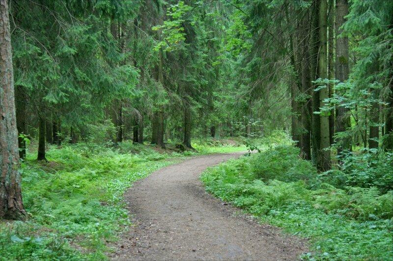 Павловский парк, Дорожка в лесной части