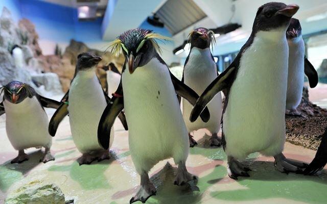 Уникальные зверюшки из зоопарков мира представлены в этом посте