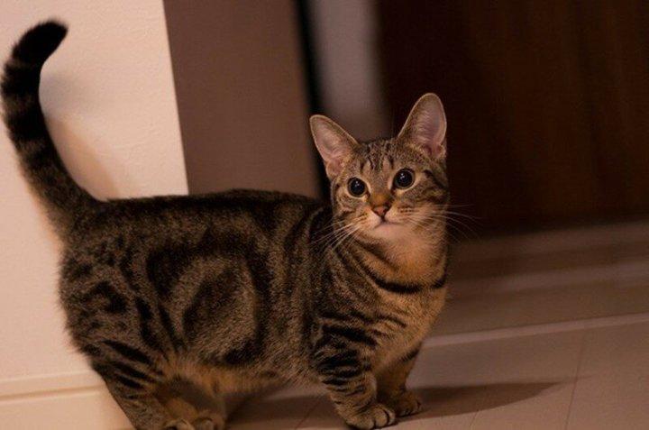 Самые красивые и необычные породы кошек (фото)