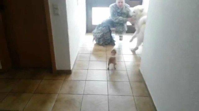 Пес Чак зустрічає солдата.Відео