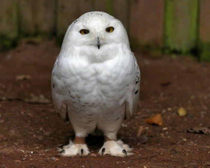 Ночная птица: фотографии, которые не соответствуют заголовку