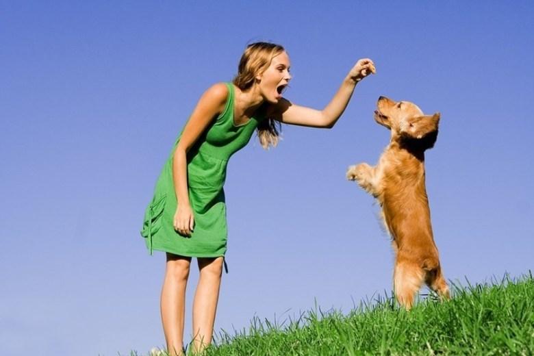 5 главных слов, которые должна знать ваша собака