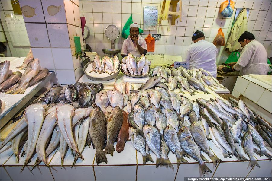 Kuwait Fishmarket / Fish Market in Kuwait