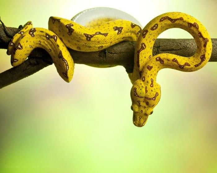 Пугающие фотографии змей