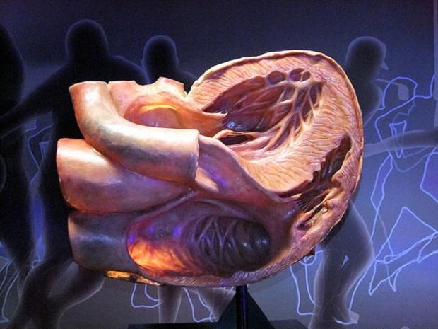 Музей человеческого тела `Corpus` | Нидерланды | Угстгест