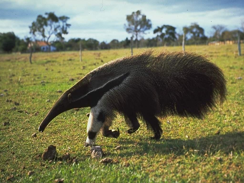 таком картинки необычных животных с названиями ухаживать диффенбахией домашних
