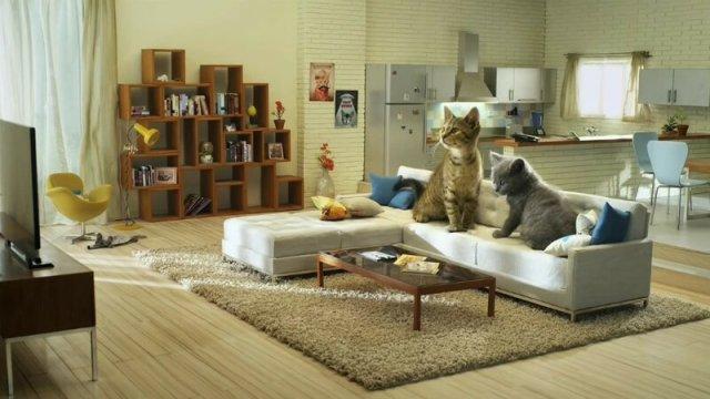 Лучшая реклама про котов (видео)