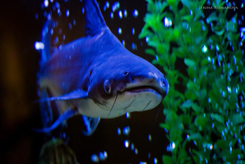 рыбы 7 л.jpg