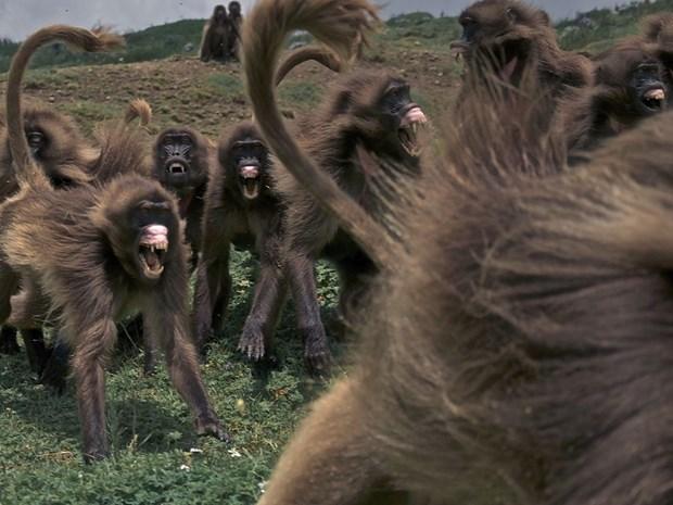 Лучшие фото животных 14 20 января от National Geographic
