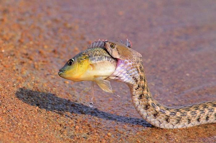 Фотографии животных хищников и животных жертв