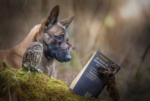 Овчарка по кличке Польди проявила удивительно нежные чувства к маленькой сове