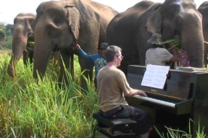 Пианист играет музыку для слонов: Бетховен для носатых великанов!