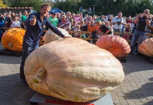 Швейцарский фермер вырастил самую большую тыкву в мире