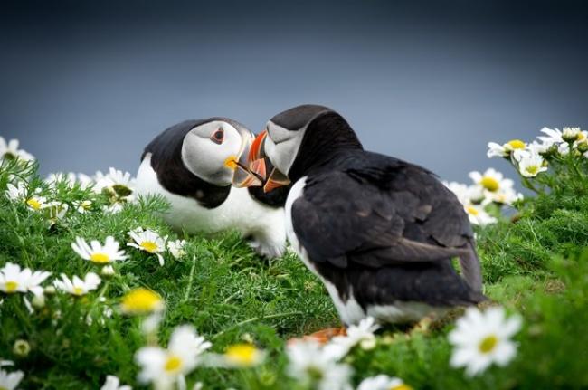 Живая природа на конкурсных снимках National Geographic Traveler Photo 2013