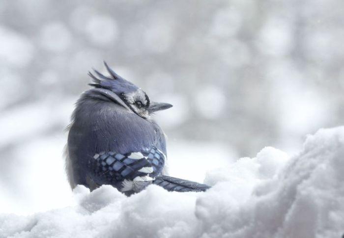 Сьюзен Хартман. Я люблю природу.