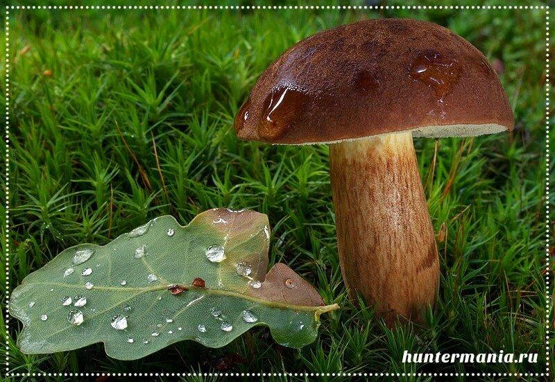 Полезная информация о грибах