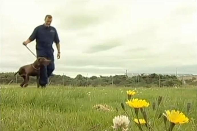 Как трехногий пес воровал корм для других собак из супермаркета